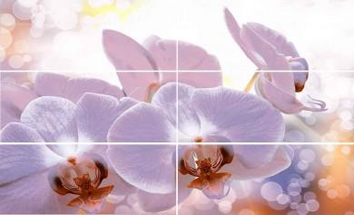 Виола орхидея